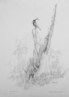 Ptak Śmierci (4)