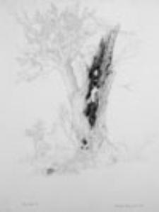 Ptak Śmierci (5)
