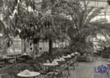 """Zielona Góra; Wnętrze kawiarni """"Palmiarnia"""""""