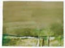 Łąki nad Odrą