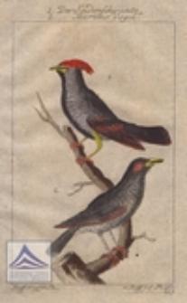 Der Seidenschwantz ; Der Martins Vogel