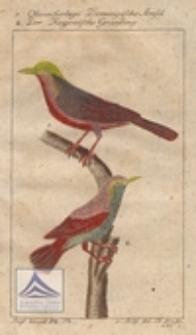 Olivenfarbige Domingische Amsel ; Der Kayenische Grauling