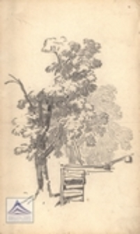 [Drzewo]