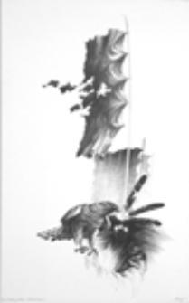 Anioł ostatniej posługi - Sokolnik Śmierci