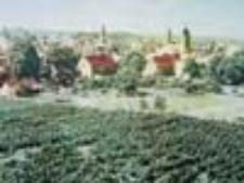 Zielona Góra; Widok ogólny - na pierwszym planie winnica